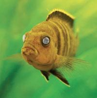 ماهیان زیبا و زینتی آکواریومی - بیماری ...